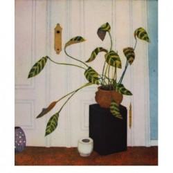 """Jutta Votteler """"An eine Zimmerpflanze"""" Bilder im Original kaufen."""